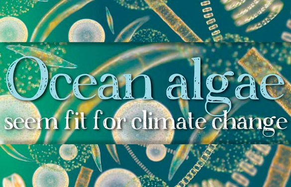 Ocean algae seem fit for climate change