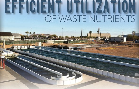 Efficient utilization of volatile waste nutrients